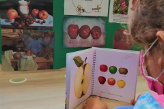 Γνωρίζοντας τα φθινοπωρινά φρούτα (8)